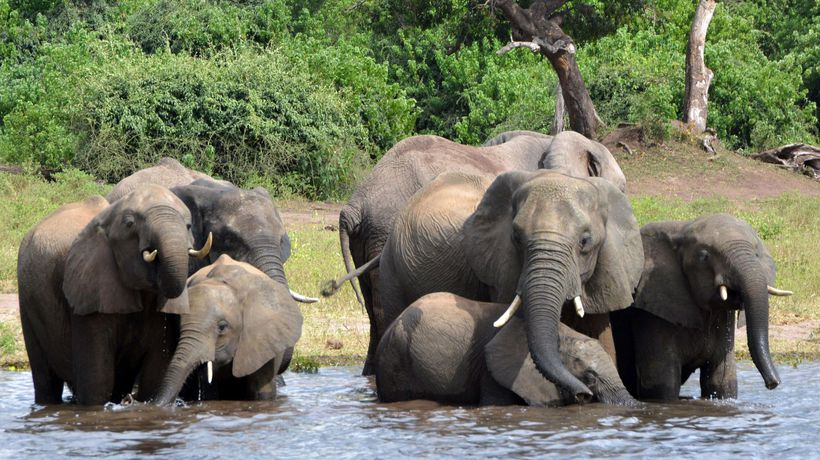 Botswana to set up boreholes to save drought-stricken elephants