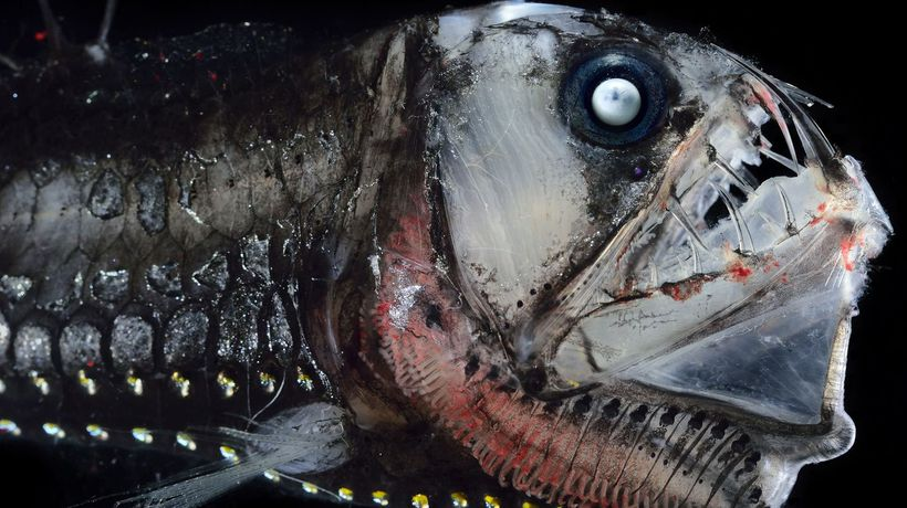 These 10 Deep Sea Creatures Seem To Come From Another World