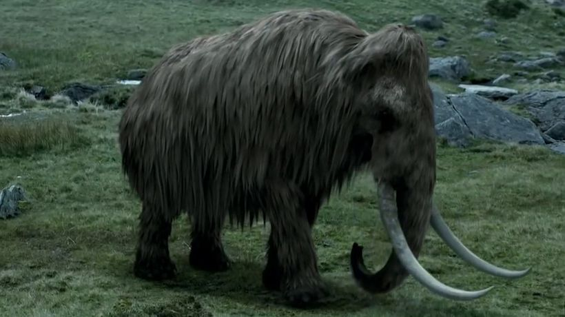 Top 10 Animals We Could Bring Back From Extinction