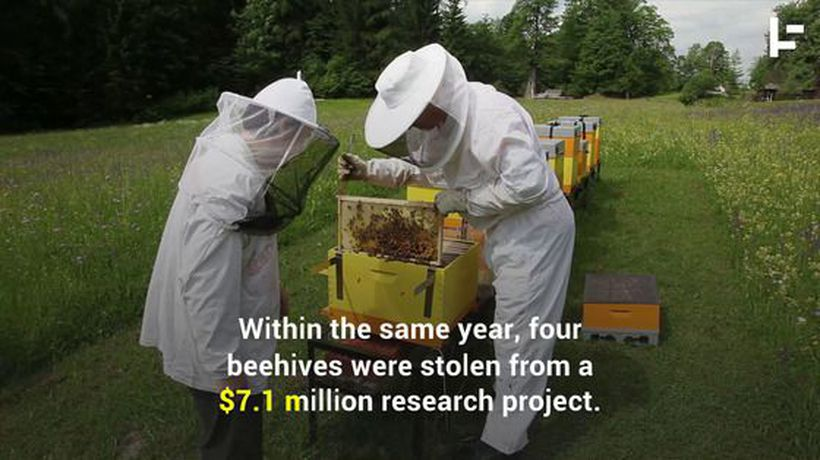 Honey Bee Theft is Becoming a Rising Problem
