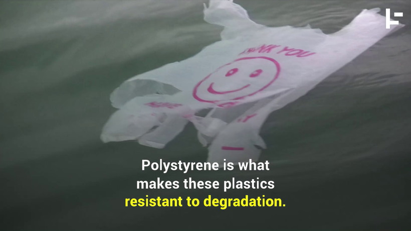 Scientists Have Discovered a Plastic-Eating Bacteria