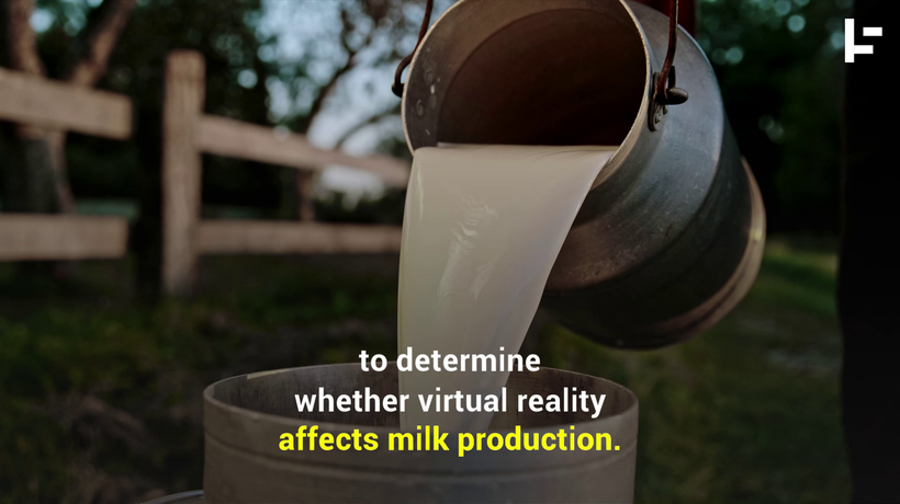 Farmers Are Putting VR Headsets on Cows to Make Better Milk