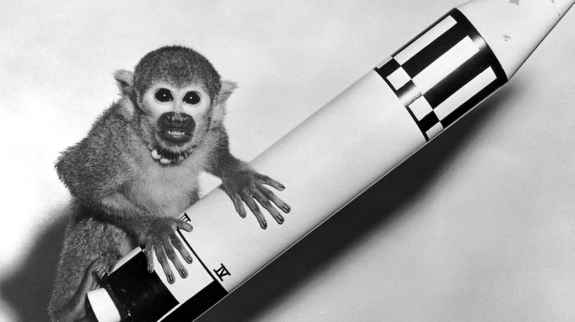 Ten Animal Astronauts That Have Gone to Space