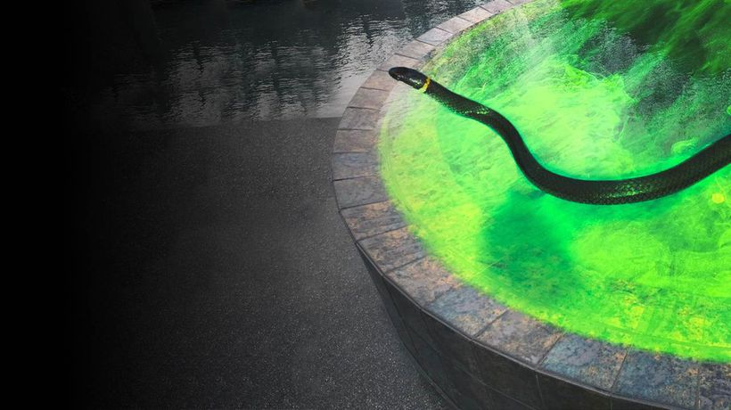 What Happens If You Fall Into a Pool Filled Snake Venom?