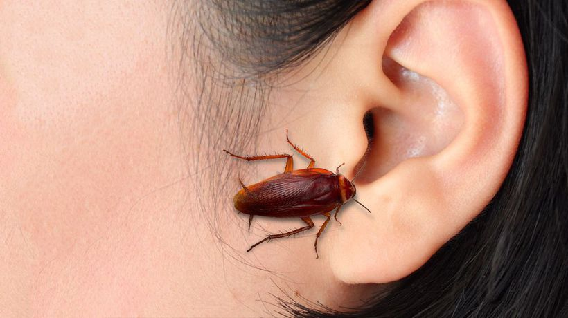 What If a Cockroach Crawled Into Your Brain?