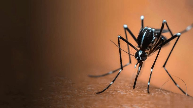 What If Mosquitoes Could Spread Vaccines?