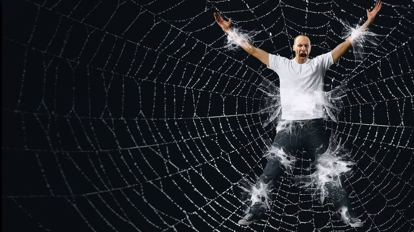 What If You Got Caught in a Giant Spider Web?
