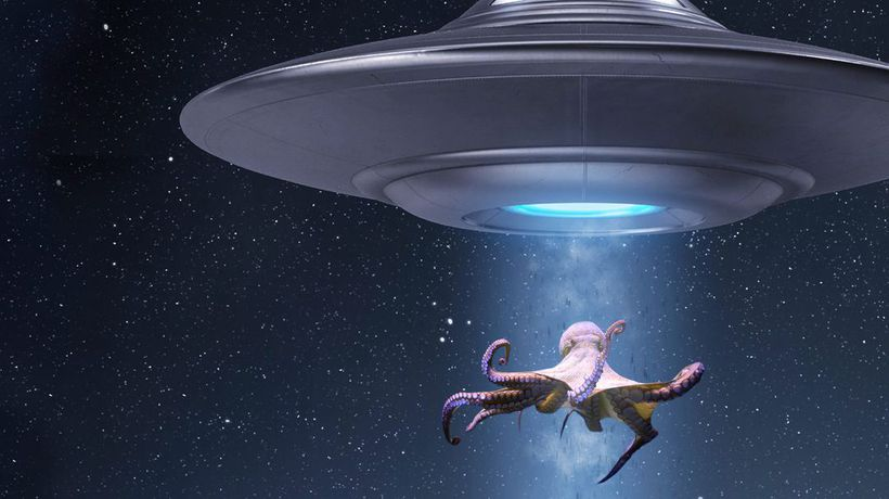 What If Octopuses Are Aliens from Outer Space?