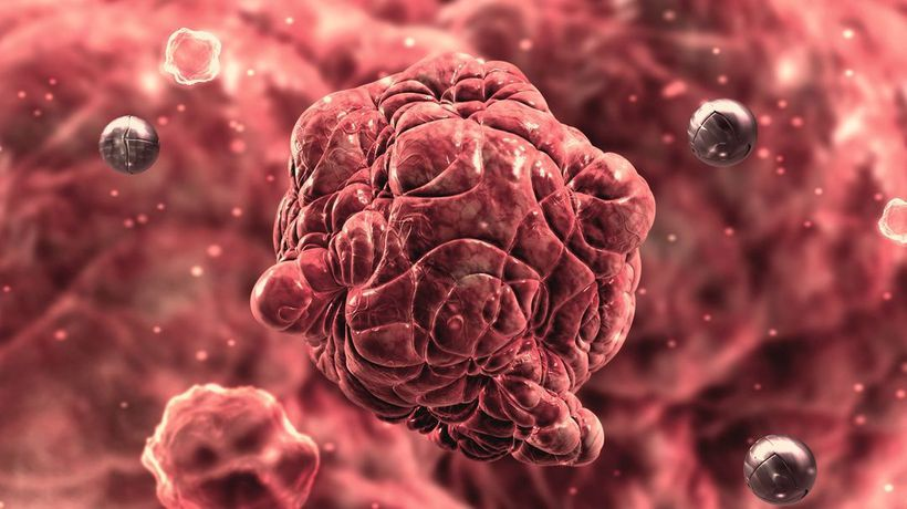 What If We Had a Secret Weapon Against Cancer?