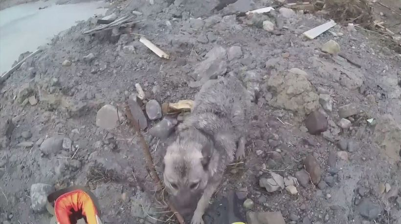 Dog rescued by helicopter after massive landslide sweeps homes into sea in Norway
