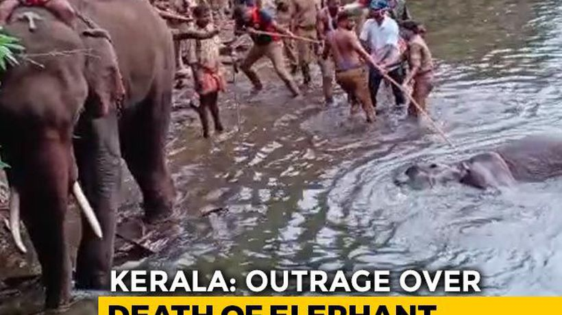 """Intentional Act To Kill The Elephant"": Kerala's Top Wildlife Officer"