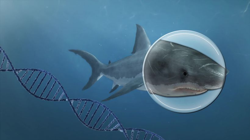 Scientists decode great white shark genome