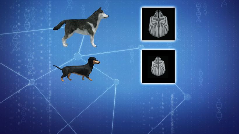 Brain scans reveal how humans have shaped dogs' brains