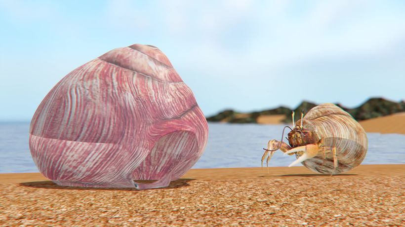 Microplastics disrupt hermit crabs' ability to select shells