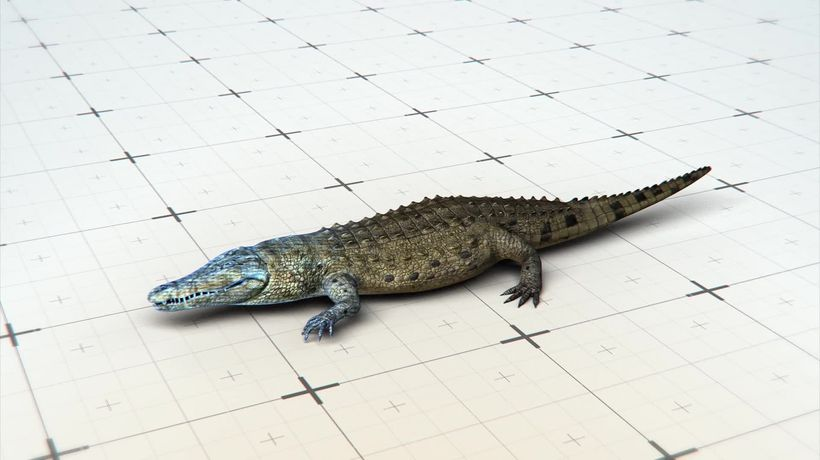 Ancient crocodiles may have walked on two feet