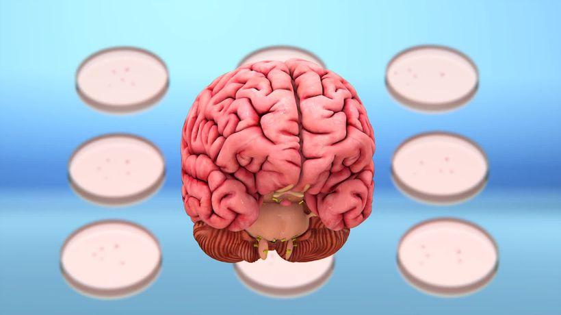 COVID-19 may infect brain cells: study