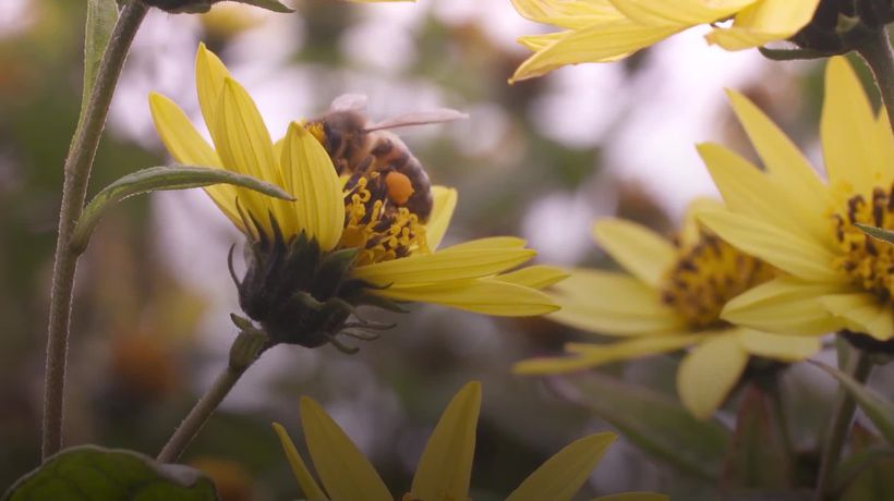 Why we need bees