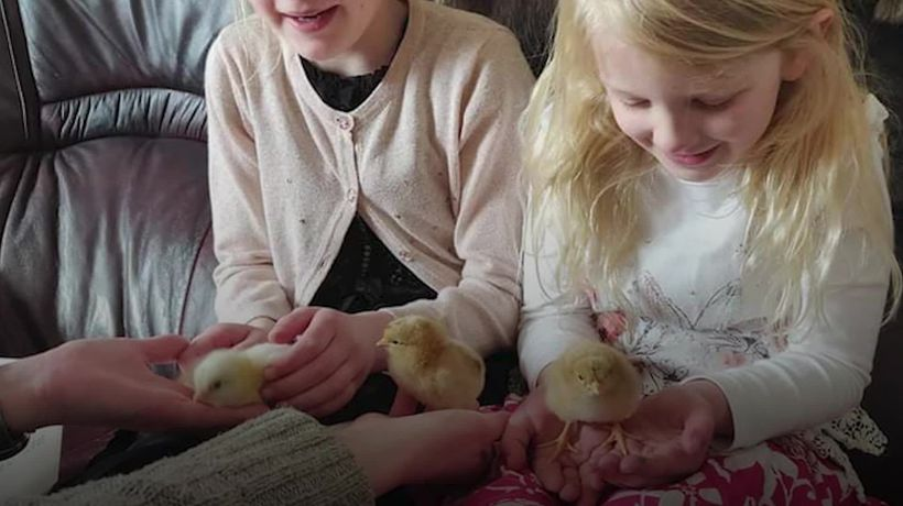 Merseyside family have Easter cracked after hatching five chicks from eggs