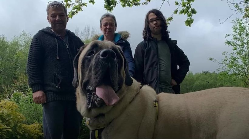 Shelter rehomes dog that weighs same as a baby elephant