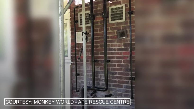 Monkey running loose in streets of London rescued