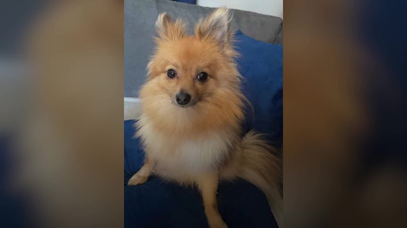 Dog owners turn pet detectives to find missing pooch