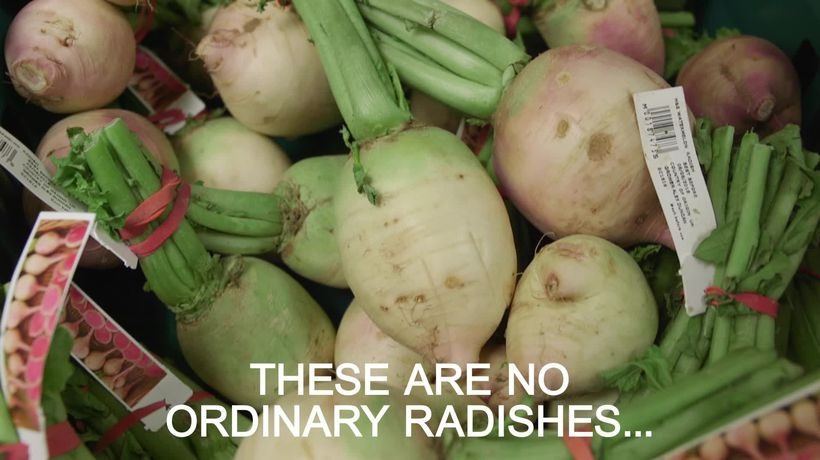 Watermelon Radish hits Marks and Spencer stores