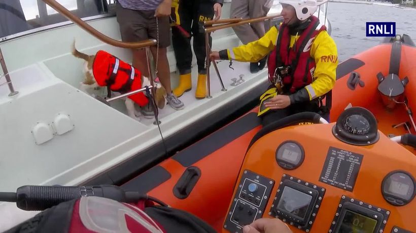 Three dogs wearing life jackets rescued from speedboat