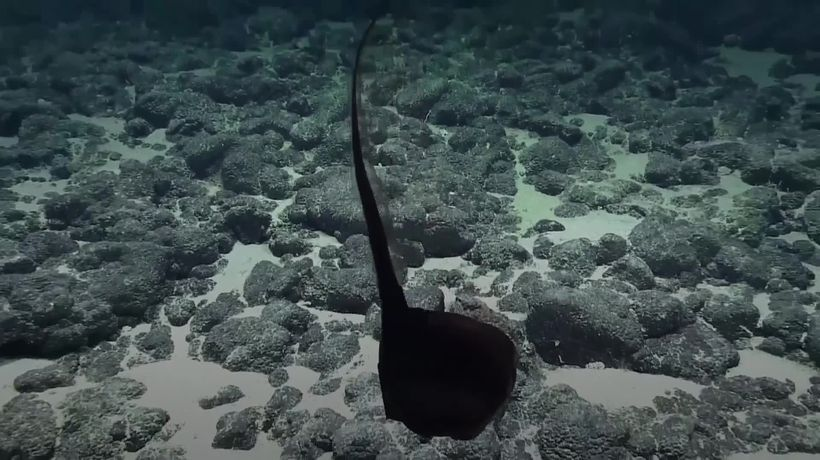 Rare eel spotted in Pacific Ocean