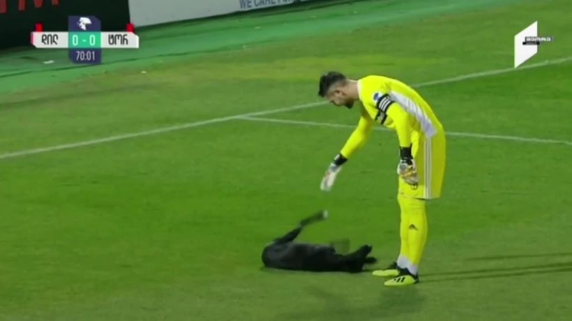 Stray dog invades pitch during Georgian football match