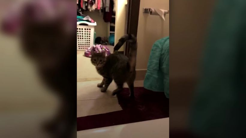 Cat gets confused by wet tail
