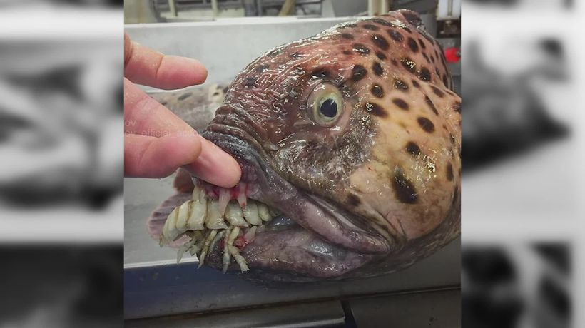 Russian fisherman shares pics of nightmare creatures from the depths