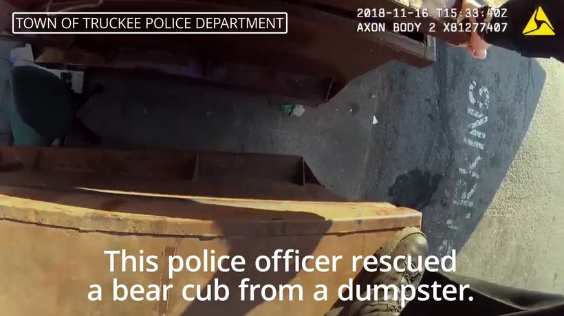 Police office rescues bear from dumpster