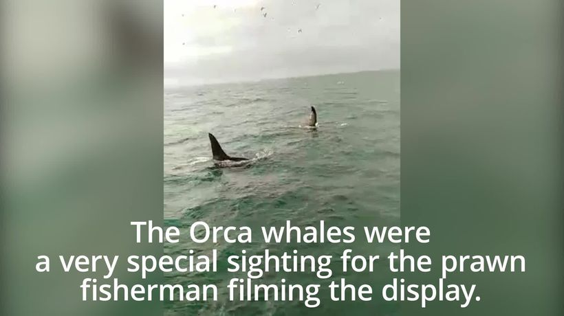 Two killer whales spotted in the Irish Sea