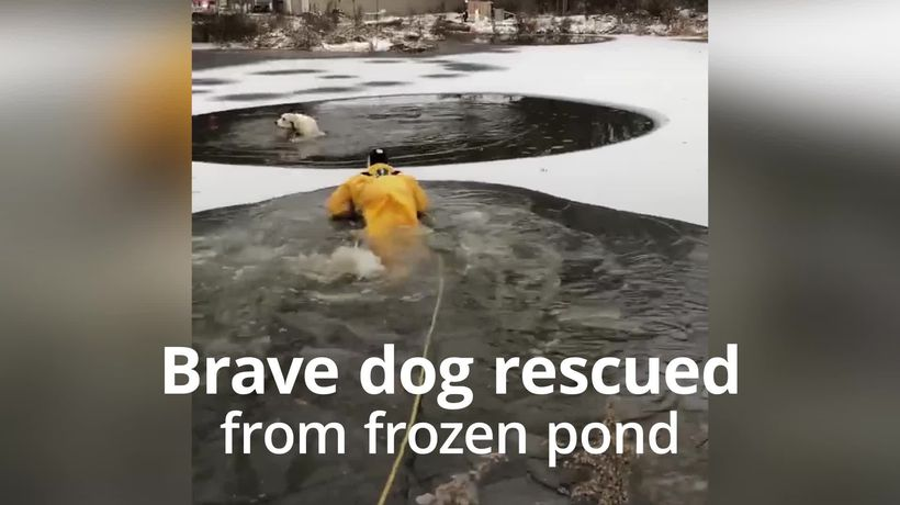 Dog rescued from frozen pond in Ohio