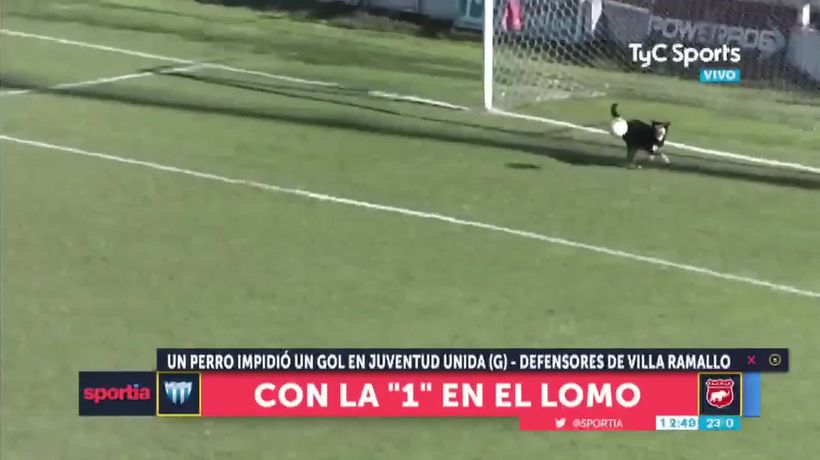 Dog makes great save in Argentinian football match