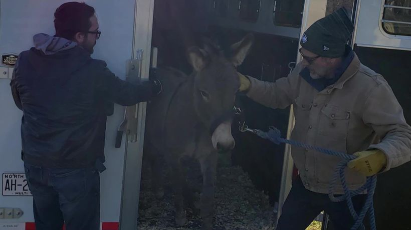 Walking Dead's Jeffrey Dean Morgan adopts a rescue donkey and emu who fell in love