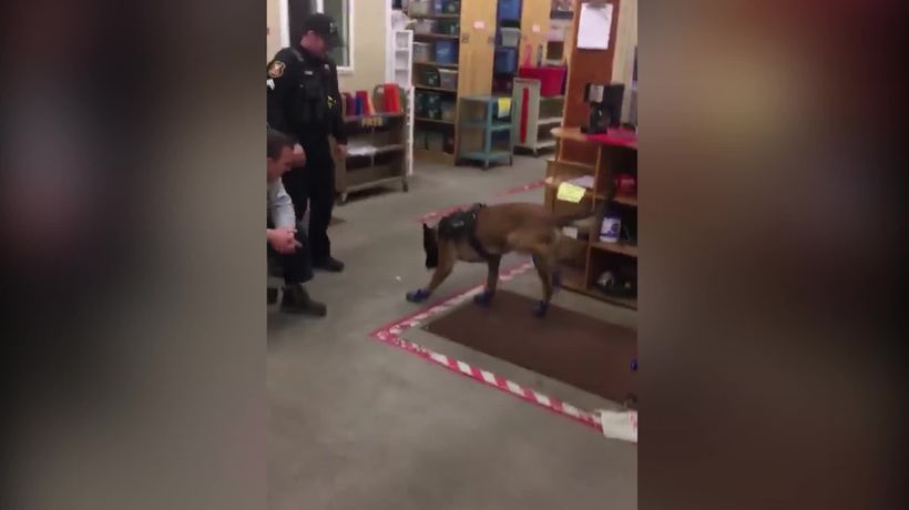 Police dog's new snow boots take some getting used to