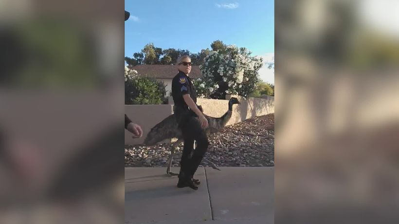 Arizona police called to a loose emu roaming the streets