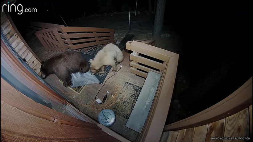 Bears in the US enjoy themselves outside people's homes