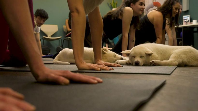 Pets Yoga relaxes participants and animals alike