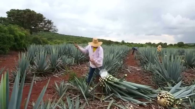 Elon Musk faces clash with Mexican tequila industry