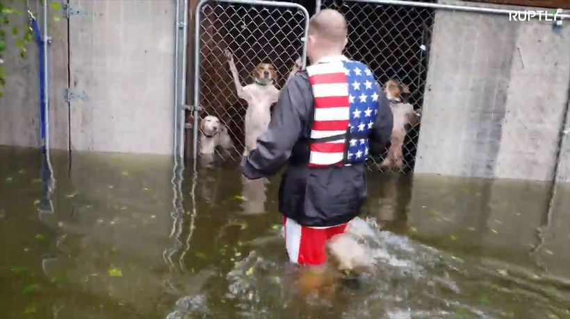 Watch dramatic rescue of trapped dogs in Florence-hit North Carolina