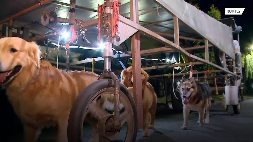 'Dog Runner Ship' walks dogs by the dozen in Buenos Aires
