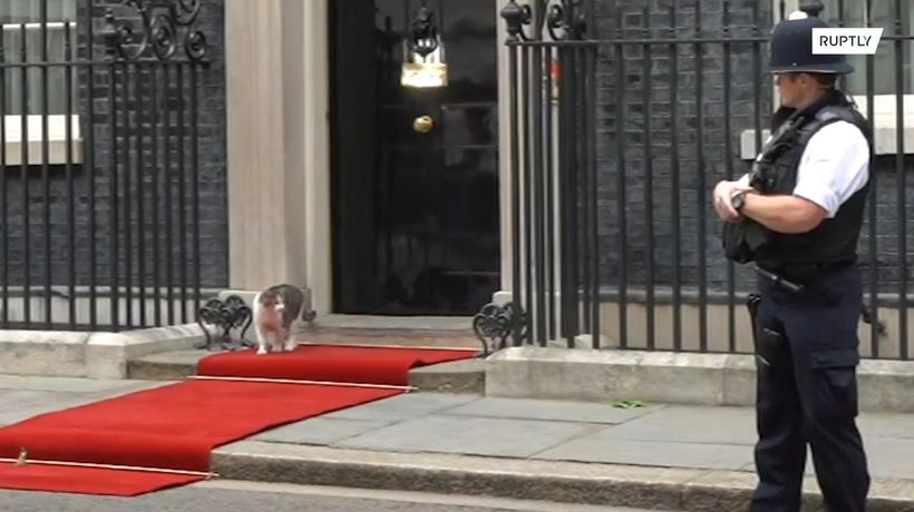 Is this for me? Downing Street cat strolls down red carpet instead of Trump!