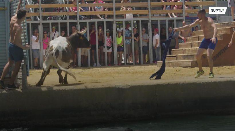 Bulls fight the current in seaside corrida