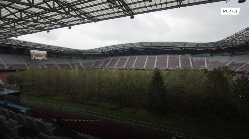 Forest' in football stadium envisions future without natural woodlands