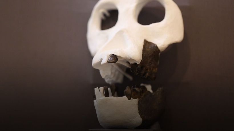 Earliest upright walking ape discovered in Germany