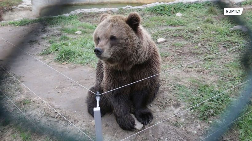 The hard times are over for these bears who found shelter in a Ukrainian village