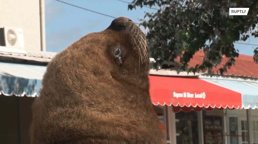 Sea lions bask in the sun after takeover of deserted Mar del Plata harbour