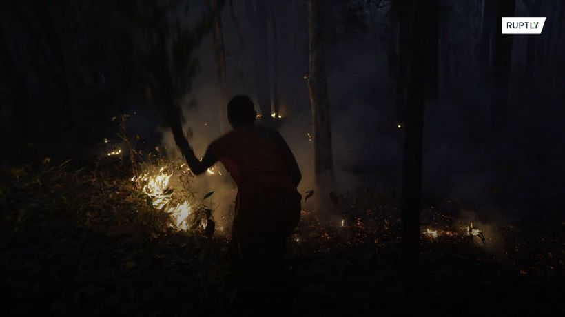Guardian monk devotes life to protecting local forest from exploitation, destruction